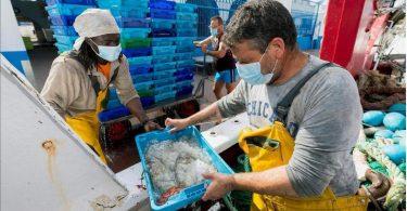 pescadores ecommerce